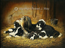 Bearded Collie Limited Edition print by Robert J. May