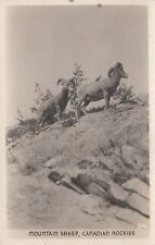 Mountain Sheep CANADIAN ROCKIES Gowen Vancouver BC Real Photo Postcard 356
