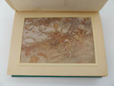 c1930 PETER PAN in KENSINGTON GARDENS by JM. Barrie & Arthur Rackham ILLUSTRATED