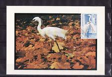 carte  1er jour   oiseau  aigrette  Villars les  dombes     1975