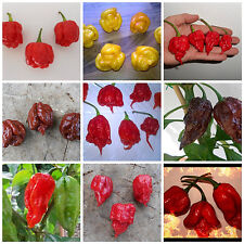 Chilisamen-Mix Bhut-Jolokia/Trinidad Scorpion/habaneros - 100 semillas-Top-Mix