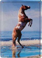 Horse Beach Pinto Pinto Speckled Aufbäumen - Shield 11cm x 8cm