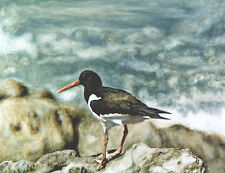 Oystercatcher POSTCARD Wader Wading Bird Steve Greaves Painting Art Nature Card
