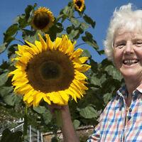 25pcs Top Quality Extra Rare Exotic Giant Sunflower Seeds Plant Garden Decor