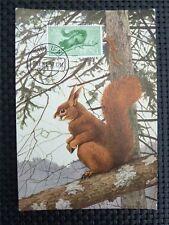 SIDI IFNI MK 1956 EICHHÖRNCHEN SQUIRREL MAXIMUMKARTE MAXIMUM CARD MC CM c3776