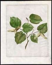 Antique Print-COMMON HAZEL-Pomologia-Knoop-1758
