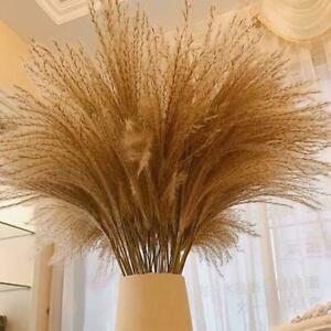 50Pcs Natural Dried Pampas Grass Reed Home Wedding Decor Home Bunch Flower V8Q8