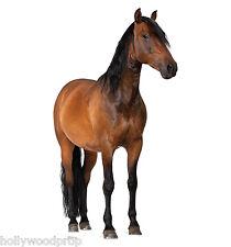 "HORSE STALLION ""LIFESIZE"" CARDBOARD STANDUP STANDEE CUTOUT POSTER FIGURE PROP"