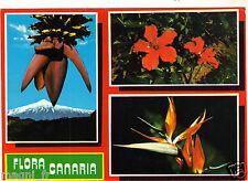 Fleurs - cpsm - Fleurs des Canaries (H5809)