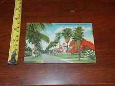 Vintage Postcard View Royal Poinciana Palm Trees Palm Beach Florida