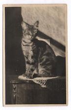 PHOTO ANCIENNE Snapshot Cat Chat Vers 1930 1950 Jeu de lumière Yeux fermés tigré