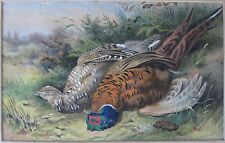 ANTIQUE VICTORIAN HUNTING BIRD HAND COLORED LITHOGRAPH POSSIBLE HART AFTER GOULD