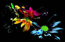 Framed Print - Abstract Green Orange Pink & Blue Flowers (Picture Poster Art)
