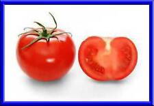 Cannonball Tomato Seeds! MAKES LOADS OF TOMATOES! Comb. S/H See our store!