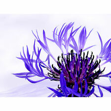 Purple Flower Vibrant Large Canvas Wall Art Print