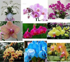 10pcs Mix-colors Butterfly Orchid Flower Seeds Phalaenopsis Bonsai flower plant