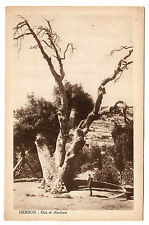 Oak of Abraham - Hebron Photo Postcard c1920s