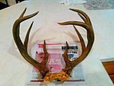 9 point Deer Rack.Whitetail? . Antlers