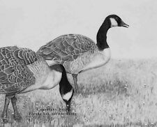 """""""Evening Walk"""" - an original graphite drawing of Canadian geese"""