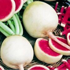 1 Pack 300 Watermelon Red Radish Seeds Delicious Crisp Vegetable Organic S049