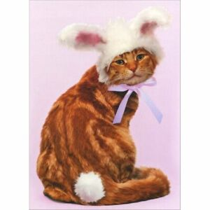 Avanti Press Easter Bob in Bunny Ears Easter Card