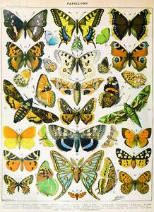 Butterflies Vintage Poster Insect Antique Illustration Canvas Prints Home Decor