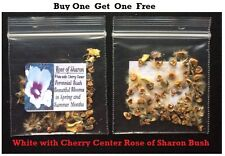 Buy 1 Get 1 Free Rose Of Sharon White Cherry Ctr. Flower Seeds 50 + Seeds 4 U