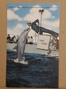 Linen Postcard ~ Mouth to Mouth Feeding at Marine Studios, Marineland ~ Unposted