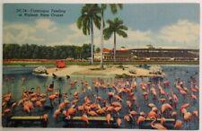 Miami Florida Postcard Vtg Early 1900s Hialeah Park Horse Race Flamingos Feed