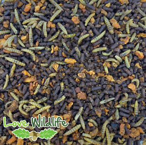 Hedgehog Food Crumble - Native Hedgehogs - Insect Meal, Wildlife, NO MEALWORMS