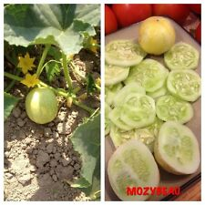 25-35 LEMON CUCUMBER SEEDS. Heirloom, Premium USA Seeds! Non-GMO.