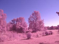 Olympus OM-D E-M10 Full Spectrum IR UV Astro Infrared converted camera