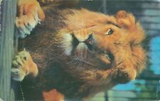 Lion M lyster london zoological