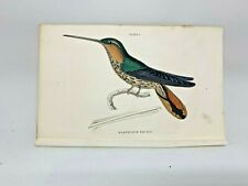 1st Ed Hand-colored Jardine's Natural History 1834 Naevius Hummingbird - 1