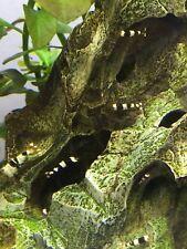 5 Crystal Black Shrimp