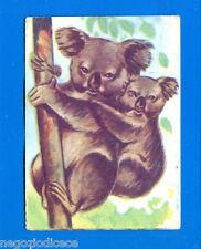 ANIMALI - Lampo 1964 - Figurina-Sticker n. 20 - KOALA -New