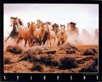 Western Wild Horse Running In Herd Wildlife Animal Wall Decor Poster (16x20)