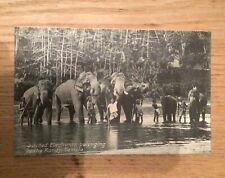 More details for original 1910 unused postcard of the sacrd elephants of the kandy temple, ceylon