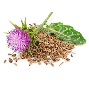 Milk Thistle Seeds Raw Seeds Detox 100% Natural Silybum Marianum Ostropest