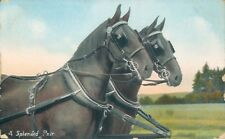 Carriage horses wildt and kray 1094 A splendid pair 1908