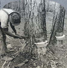 Keystone Stereoview Chipping Pine Trees for TURPENTINE, GA 600/1200 Card Set T2