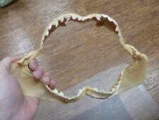 "(sj470-115-11) 9"" Tiger SHARK B grade jaw sharks teeth taxidermy educational"