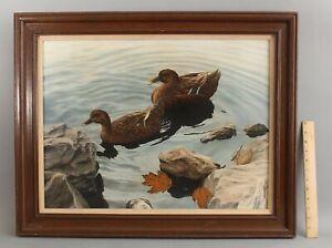 DAVID PAVLAK Photo Realism MALLARD HEN DUCK Wildlife Ornithology Bird Painting