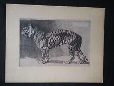 1911 Stampe antiche di Mathurin Méheut Tigres Tigre