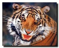 Tiger Angry Face Wall Decor Wildlife Animal Nature Wall Decor Art Print (16x20)