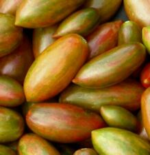 COMB Nature/'s RiddleTomato Seeds RARE HEIRLOOM S//H SEE OUR STORE