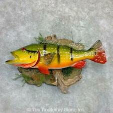 """#23122 P+ 