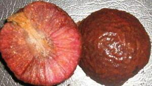 African Peach - Nauclea latifolia - 25+ seeds - Semillas - Graines