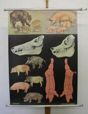 Beautiful Mural jkq Wild Bill Wild Pig Boar SUS 82x113cm Vintage Animals 1974
