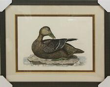 Custom Framed Art - Original Engraving Plate LXX Eider Female - Duck in Water